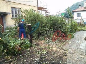 Рязане на дървета и почистване на дворове