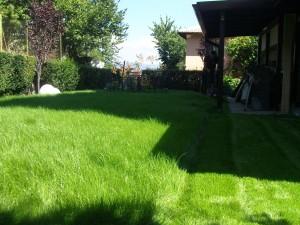 затревяване с тревна смеска