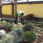 градинарски услуги на ниски цени