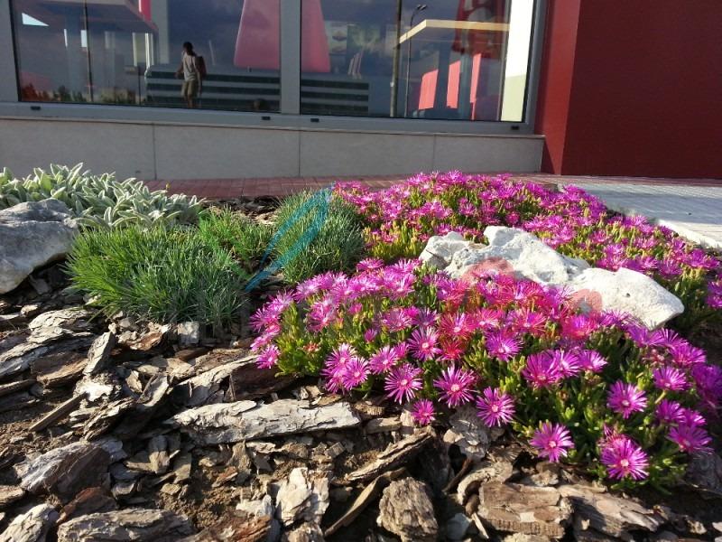 засаждане на външни цветя