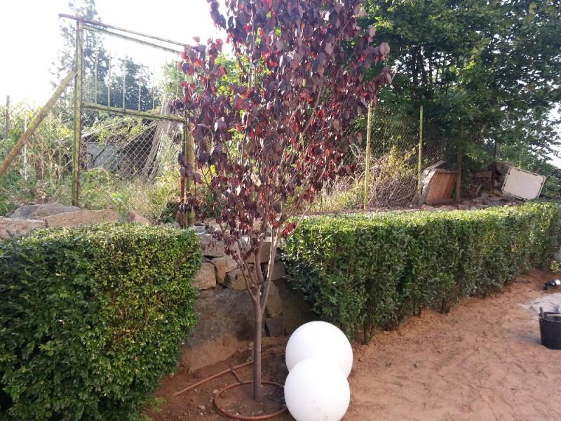 Озеленяване и поливна система