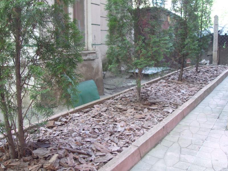 Мулчиране на туи в София