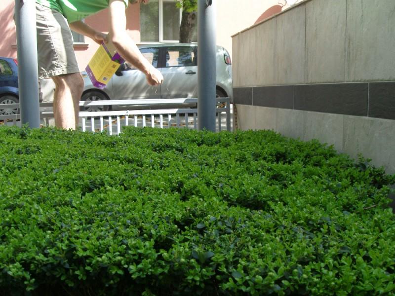 Подсяване с тревно семе на тревен килим