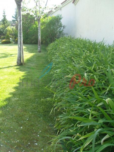 храсти в двора