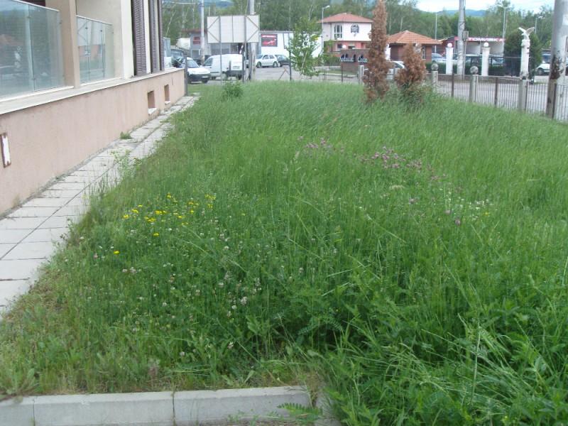 Зелена площ в Перник преди намесата на Иригейшън Про