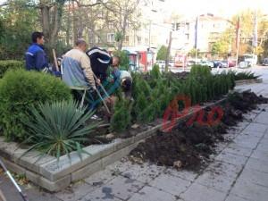 засаждане на дървета и храсти (31)