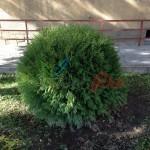засаждане на дървета и храсти (89)