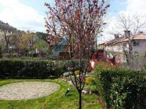 цъфтящи дървета през пролетта
