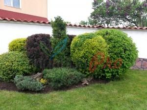 група от декоративни храсти и дървета