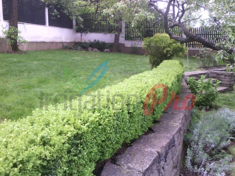 озеленяване и жив плет за София на достъпни цени