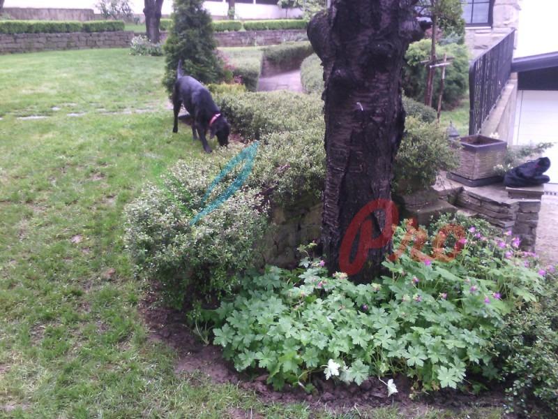 здравец и храсти в двора
