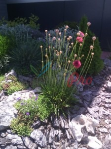 пролетни цветя за алпинеум