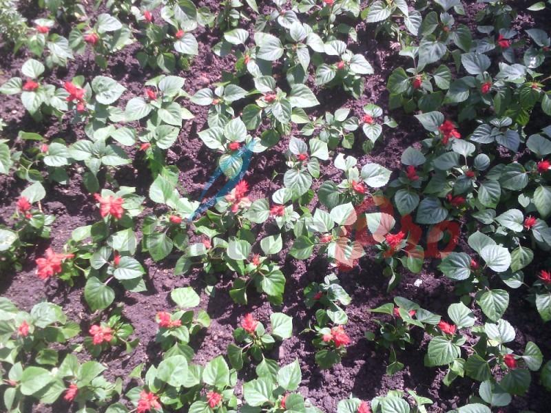 цветни фигури и знаци от летни цветя