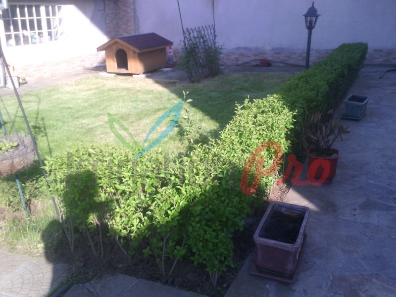 изграждане на жив плет в двора и градината