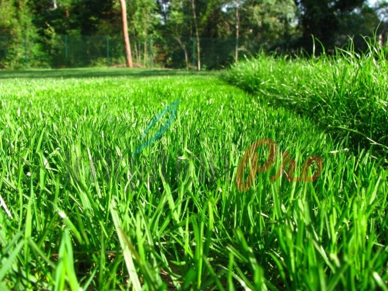 тревен килим на първо косене