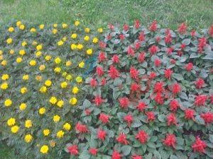 Цветни фигури бул. Витоша
