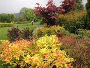 Поддръжка на озеленяване и поливна система