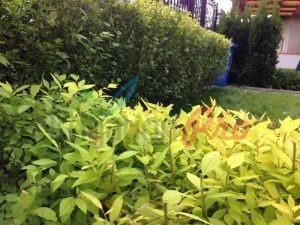 Поливна система и озеленяване на двор в Етрополе
