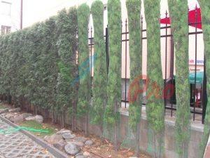 Разпролетяване и зазимяване на дворове