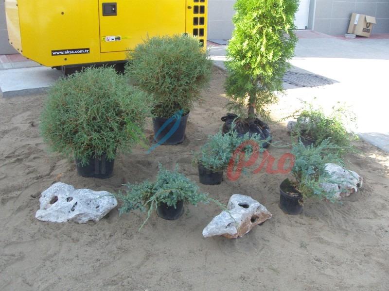 аранжиране на цветя и храсти