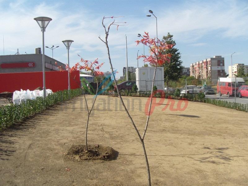 засаждане на дръвчета