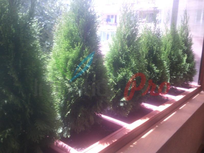 засаждане на туи и други цветя за балкон и тераса