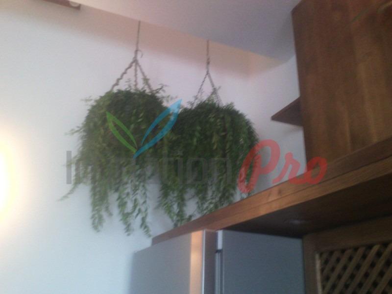 падащи сенколюбиви растения