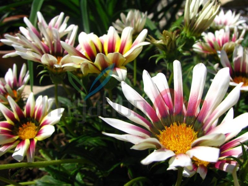 красиви цветя за двора и градината